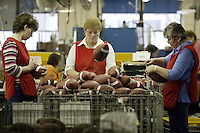 20 January 2005: Barb Ulrey, left, Rose Sanders, center, and Pam Clark inspect footballs at the Wilson football factory where Super Bowl footballs are made Thursday January 20, 2005 in Ada, Ohio.<br />
