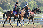 Point of Entry, trained by Shug Mcgaughey,exercises in preparation for the upcoming Breeders Cup at Santa Anita Park on October 30, 2012.