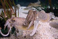 Spanien, Barcelona, Aquarium an der Moll d'Espanya del Port Vell