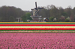 Keukenhof Gardens, Lisse, Netherlands .  John offers private photo tours and workshops throughout Colorado. Year-round.