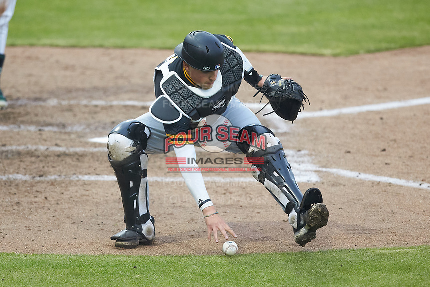 Appalachian State Mountaineers catcher Carson Arnold (6) picks up the baseball during the game against the Charlotte 49ers at Atrium Health Ballpark on March 23, 2021 in Kannapolis, North Carolina. (Brian Westerholt/Four Seam Images)