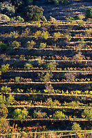 Terraced vineyard. Priorato, Catalonia, Spain