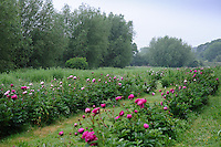 General views of the Peony Valley