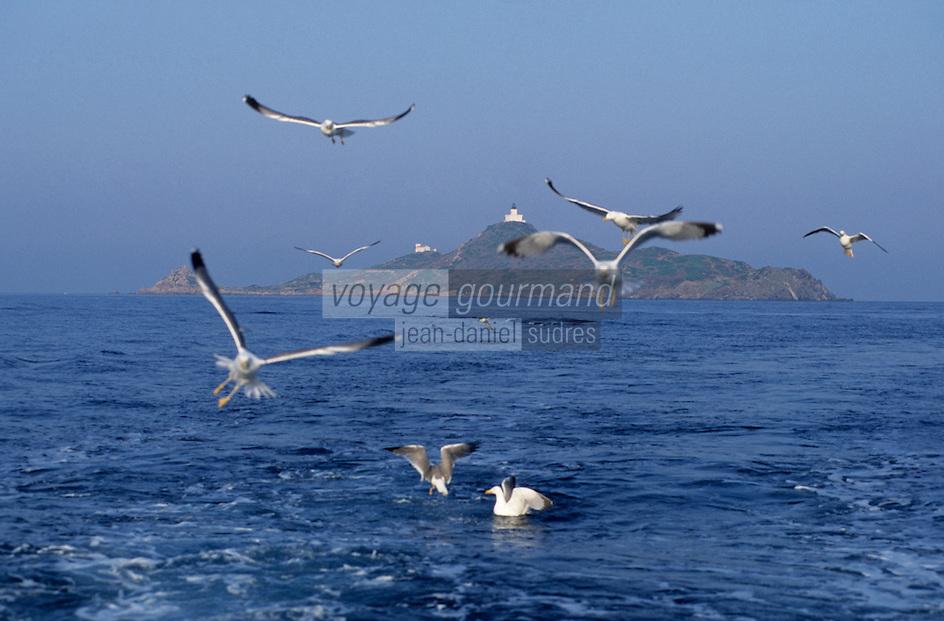 France/Corse/Corse-du-Sud/2A/Ajaccio: Mouettes dans le golfe d'Ajaccio et les iles Sanguinaires à l'arrière plan