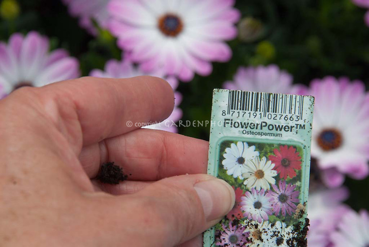 Plant label of FlowerPower Osteospermum in hand with flowers blurred behind, trademark symbol