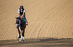 APRIL 27, 2014: Unbridled Forever, trained by Dallas Stewart, exercises in preparation for the Kentucky Oaks at Churchill Downs in Louisville, KY. Jon Durr/ESW/CSM