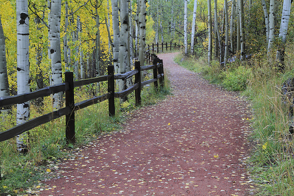 Hiking trail and fence in an aspen tree forest, San Juan Mountains, Colorado.