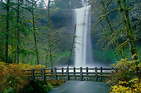 South Falls, salmonberries, red alders<br />   and footbridge over Silver Creek <br /> Silver Falls State Park<br /> Cascade Range, Oregon