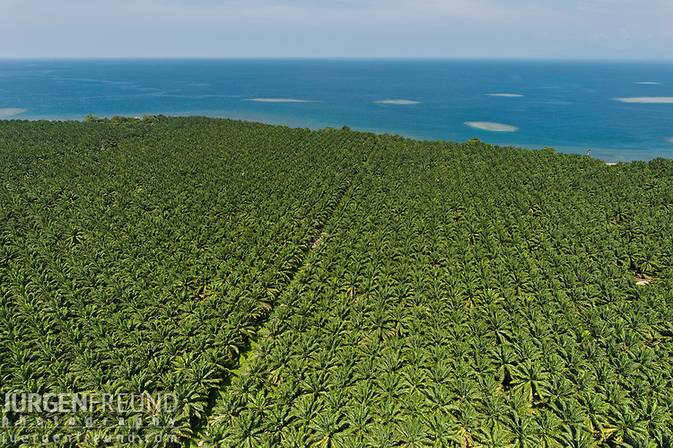 Aerial of palm (Elaeis quineesis Jacq) oil plantation of New Britain Pam Oil Limited (NBPOL)