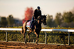 October 31, 2020: Gypsy King, trained by trainer Wesley A. Ward, exercises in preparation for the Breeders' Cup Juvenile Turf at Keeneland Racetrack in Lexington, Kentucky on October 31, 2020. Alex Evers/Eclipse Sportswire/Breeders Cup