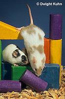 MU60-077z  Pet mouse - exploring
