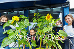 Ballybunion Sunflower Festival: Erin Dore, Lily Belle, Emma Kennelly & Cara Segal, Marine Hotel.