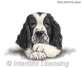 Marcello, REALISTIC ANIMALS, REALISTISCHE TIERE, ANIMALES REALISTICOS, paintings+++++,ITMCEDC1133/BLACK,#a#, EVERYDAY