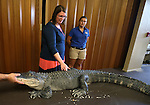 Director Sena Loyd pets Izod, a North American alligator, following a Wild Things program at the Carson City Library, in Carson City, Nev., on Wednesday, July 30, 2014. <br /> Photo by Cathleen Allison