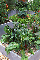 Galvanized steel metal raised bed container vegetable garden, with Swiss chard, tomatoes, spinach, etc.