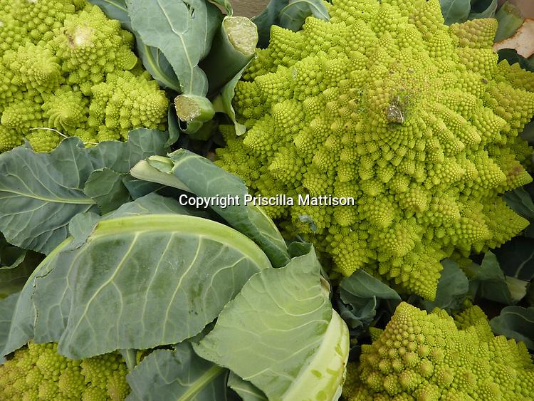 Closeup of four heads of Roman cauliflower