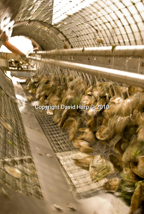 Oyster aquaculture at Marinetics on the Choptank River near Cambridge, MD.   Oysters are grown in floats high in the water column.