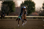 November 5, 2020: Uni, trained by trainer Chad C. Brown, exercises in preparation for the Breeders' Cup Mile at at Keeneland Racetrack in Lexington, Kentucky on November 5, 2020. Alex Evers/Eclipse Sportswire/Breeders Cup