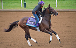 October 26, 2015 :  Greenpointcrusader, trained by Dominick A. Schettino and owned by St. Elias Stables, Brooklyn Boyz Stables & MEB Stables, exercises in preparation for the Sentient Jet Breeders' Cup Juvenile at Keeneland Race Track in Lexington, Kentucky on October 26, 2015. in Lexington, Kentucky. Scott Serio/ESW/CSM