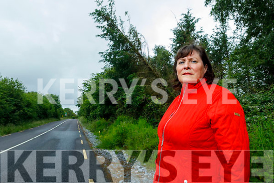 Martina O'Brien from Listellick feels the overhanging, rotten trees on the Tralee to Abbeydorney road near Listellick   are dangerous. She has contacted the council and forestry company, but nothing was done