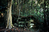 Big Island, Hawaii. Dilapidated shack amongst tall trees, overgrown with creepers with bright flowers at Kolekole Beach Park.