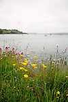 Buttercups-looking towards Otago Peninsula from Port Chalmers, New Zealand