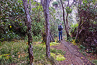 A hiker walks on one of the many boardwalks on the Alaka'i Swamp Trail towards Kilohana Lookout on Kaua'i. Many boardwalks cover parts of the trail that are otherwise impassable during the rainy season.