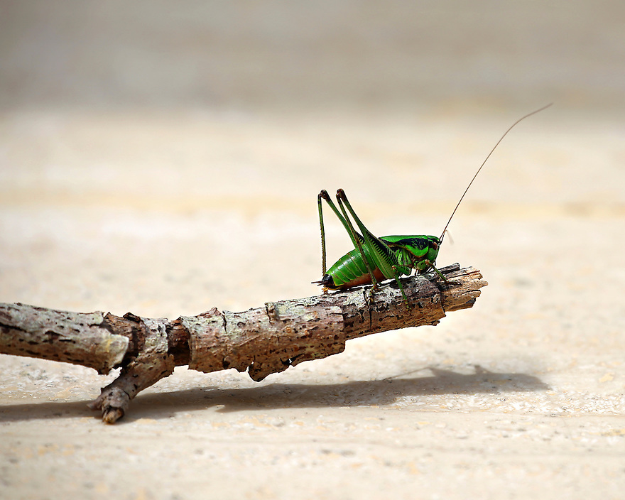 Insects are amazing creatures that make some of the most fascinating photography subjects.
