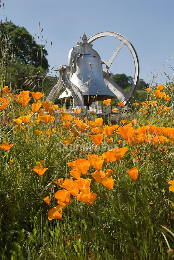 Bell and California Poppies in middle of Drytown, Amador County, Calif.