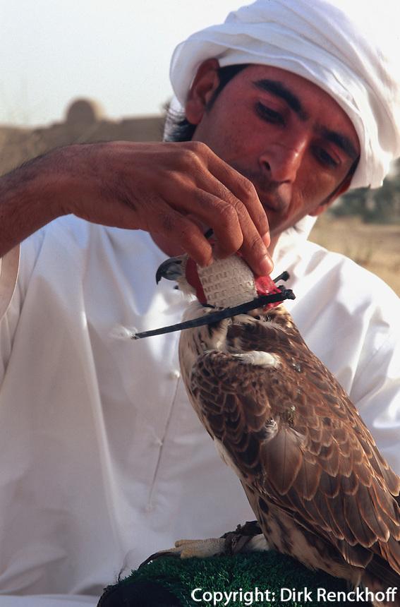 Vereinigte arabische Emirate (VAE, UAE), Bab al Shams bei Dubai, Jagdfalke