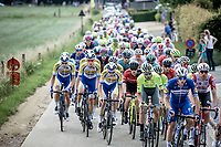 peloton<br /> <br /> Heistse Pijl 2019<br /> One Day Race: Turnhout > Heist-op-den-Berg 194km (UCI 1.1)<br /> ©kramon
