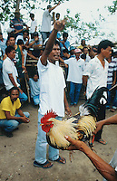 Philippines. Negros Island. Province of Negros Occidental, located in the  Western Visayas region. Barangay (village) Kampo Berde. Cockfights on a sunday afternnon. Crowd of men. Hands and a fighting cock. Cockscomb. © 1999 Didier Ruef