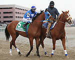 Siete de Oros post parade_ Revolutionary (#2) with Javier Castellano splits horses to win the 133rd running of the Grade 3  Withers Stakes for 3-year olds, going 1 1/16 on the inner dirt, at Aqueduct Racetrack.  Trainer Todd Pletcher.  Owner Winstar Farms