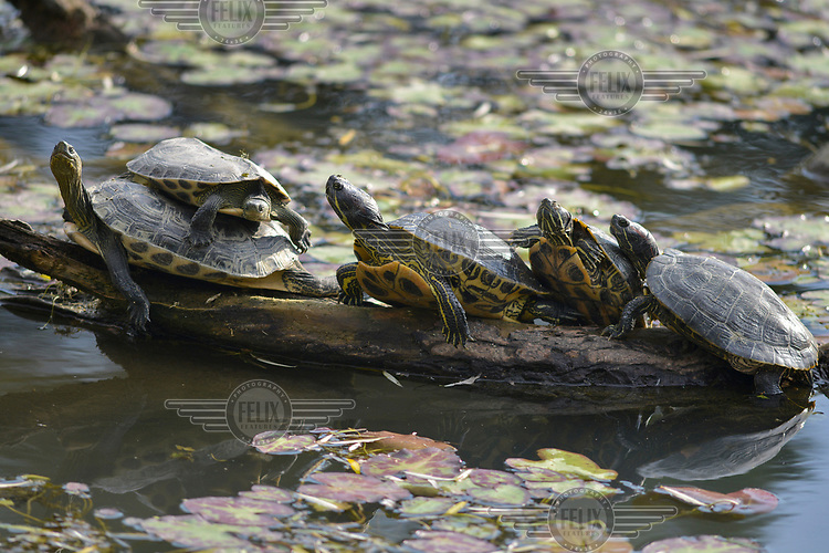 Turtles basking in grounds of the vast National Taiwan University campus.