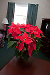 A Poinsettia flower sitting on a desk in a Hotel Room