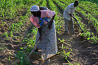 TANZANIA Region Mara, Musoma,  village Bokabwa, Kuria tribe, subsistence farmer work in maize field, the soil is very dry due to lack of rain / TANSANIA Region Mara, Musoma,  Dorf Bokabwa, Kuria Ethnie, Subsistenzbauern jaeten ein Maisfeld, der Boden ist sehr trocken, da der Regen bisher ausgeblieben ist