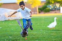Child runs a duck. plays with wildlife ducks in wetlands (Photo: Luis Gutierrez / NortePhoto.com).<br /> Niño corretea un pato. juega con patos de vida silvestre   en humedal (Photo: Luis Gutierrez / NortePhoto.com).