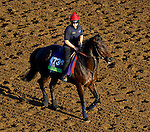 October 28, 2014:  Trade Storm, trained by David Simcock, exercises in preparation for the Breeders' Cup Mile at Santa Anita Race Course in Arcadia, California on October 28, 2014. John Voorhees/ESW/CSM