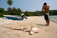 Dead zebra shark, Stegostoma fasciatum, with a tourist on the beach as a product of bycatch and fisherneb coming into the bay to clean their nets. Pulau Perhentian, South China sea, Penninsular Malaysia, Asia