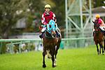 FUNABASHI,JAPAN-APRIL 14: Oju Chosan,ridden byShinichi Ishigami , after winning  the Nakayama Grand Jump at Nakayama Racecourse on April 14,2018 in Funabashi,Chiba,Japan (Photo by Kaz Ishida/Eclipse Sportswire/Getty Images)