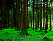 Tom Mackie, LANDSCAPES, LANDSCHAFTEN, PAISAJES, FOTO, photos,+4x5, 5x4, bark, Conifer, dramatic, Eire, EU, Europa, Europe, European, forest, glade, green, horizontal, horizontally, horizo+ntals, Ireland, Irish, larch, larches, large format, lush, mood, moody, moss, mysterious, mystery, pattern, patterns, peacefu+l, pine, tree, woodland, backlit, shadow, plantation, planted, restful, spring, tree, tree trunk, trees, wood, woodland,4x5,+5x4, bark, Conifer, dramatic, Eire, EU, Europa, Europe, European, forest, glade, green, horizontal, horizontally, horizontals+,GBTM030246-1,#L#, EVERYDAY ,Ireland