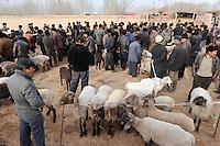 CHINA province Xinjiang, market day in uighur village Langar near Kashgar, cattle market / CHINA Provinz Xinjiang, Tiermarkt auf Markttag in Langar einem uigurischen Dorf bei Stadt Kashgar hier lebt das Turkvolk der Uiguren, das sich zum Islam bekennt