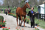 April 22, 2015: Colleen Rutledge and #1 Shiraz  at the Rolex Three Day Event first horse inspection.  Candice Chavez/ESW/CSM