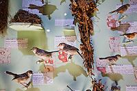A bird display at the Nairobi National Museum.