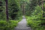 Beaver Dam Trail at Parker Dam State Park, Pennsylvania