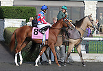 Brown Almighty and Francisco Torres in the $150,000 Grade 3 The Bourbon at Keeneland Racecourse for 2 year old colts.  October 7, 2012.