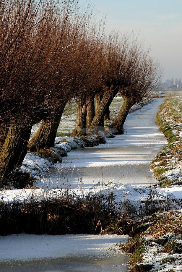 Knotwilgen winterbeeld, Alblasserwaard