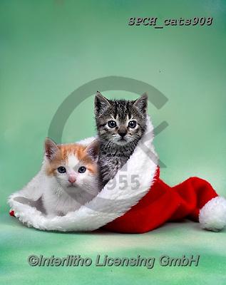 Xavier, CHRISTMAS ANIMALS, WEIHNACHTEN TIERE, NAVIDAD ANIMALES, photos+++++,SPCHCATS908,#xa# ,cat