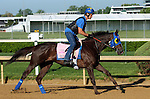 LOUISVILLE, KY - APRIL 24: Venus Valentine (Congrats x Valentine Fever, by Stormin Fever) gallops at Churchill Downs, Louisville KY with rider Maurice Sanchez in preparation for the Kentucky Oaks. Owner Rosemont Farm LLC, trainer Thomas A. Amoss. (Photo by Mary M. Meek/Eclipse Sportswire/Getty Images)
