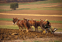 AJ3255, Amish Country, farmer, amish, mules, Pennsylvania Dutch Country, Pennsylvania, Amish farmer plows his field with a mule team on a farm in Lancaster County in the state of Pennsylvania.